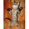Продаётся шотландский котёнок (скоттиш-страйт) .